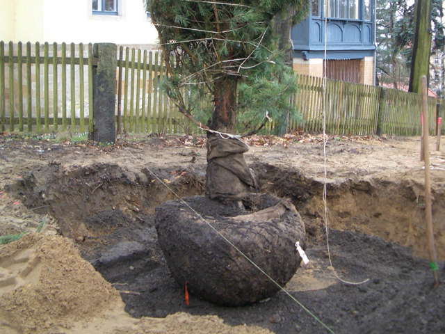 bepflanzung3